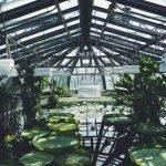 Botanischer Garten in Berlin